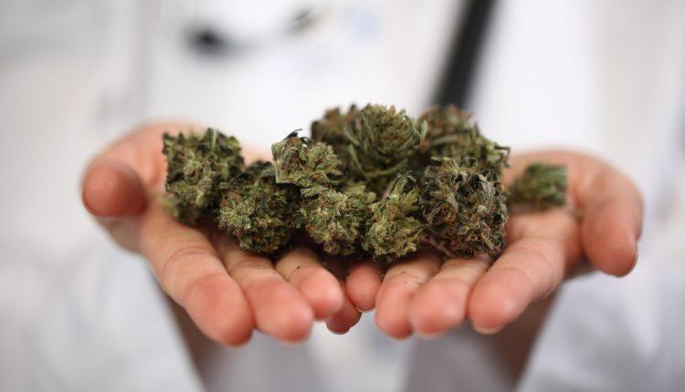 Medical Marijuana In Florida 1